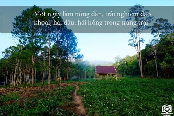 Khu vực chúng tôi cắm trại là một nông trại của người dân. Họ trồng cả khoai lang, dâu, hồng để du khách có thể trải nghiệm cảm giác một ngày làm nông dân.