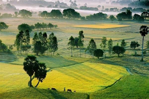 Cánh đồng Tà Pạ: Cánh đồng Tà Pạ ở huyện Tri Tôn vào mùa nước nổi như một tấm thảm rộng lớn với những đồng lúa xanh ngắt và những hàng thốt nốt hiên ngang giữa trời xanh. Nhìn từ trên cao, Tà Pạ như một tấm thảm xanh ngút ngàn màu lúa, lác đác điểm tô bằng những ngọn thốt nốt cao vút. Ảnh:bienphong.com.vn