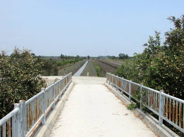 Một chiếc cầu bắc ngang kênh, bên cầu là rẫy khóm bạt ngàn của vùng đất Thạnh Tân - Ảnh: N.T.Đăng