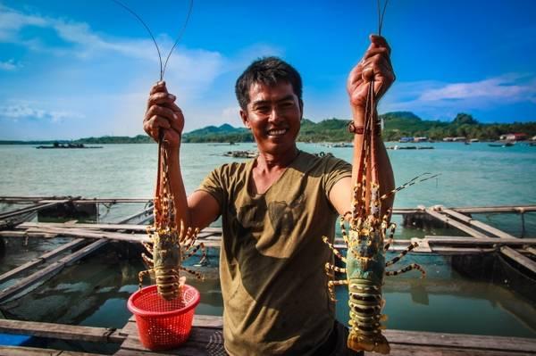 Sở dĩ Bình Ba còn có tên gọi là đảo Tôm Hùm vì hầu như ở đây nhà nào cũng nuôi tôm trên bè.Ảnh: baogiaothong
