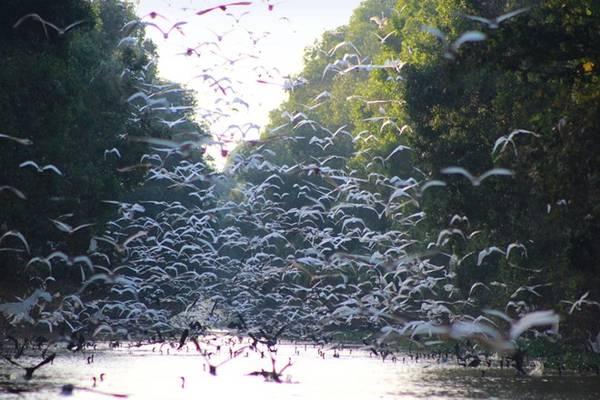 Vườn quốc gia Tràm Chim: Hàng năm mỗi khi con nước tràn về, Tràm Chim lại khoác lên mình tấm áo mới đầy sắc màu cùng vũ điệu rực rỡ của thiên nhiên. Thay vì chọn lúc bình minh như đại đa số, bạn có thể bắt đầu hành trình khám phá vào lúc buổi chiều để tận hưởng những khung cảnh tuyệt diệu. Ngoài ra, mùa nước nổi cũng là lúc những cánh đồng sen ở Đồng Tháp nở rộ khắp nơi nên đi ghe vào giữa đồng sen để có thể cảm nhận được trọn vẹn vẻ đẹp giữa đồng sen bao la nơi đây. Ảnh: Quỷ Cốc Tử