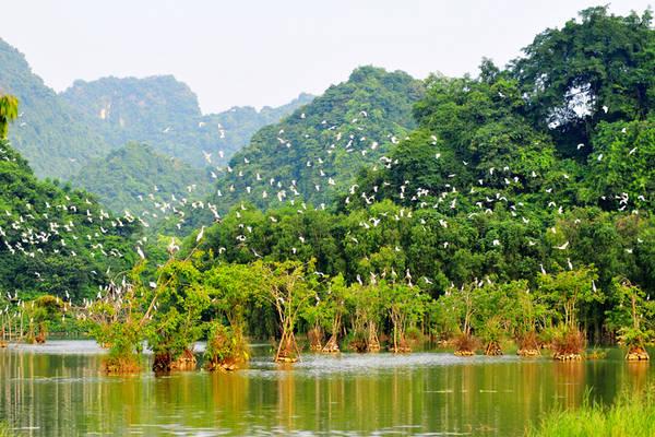 Vườn Chim Thung Nham nằm ở xã Ninh Hải, huyện Hoa Lư. Ảnh: vuonchimthungnham.com