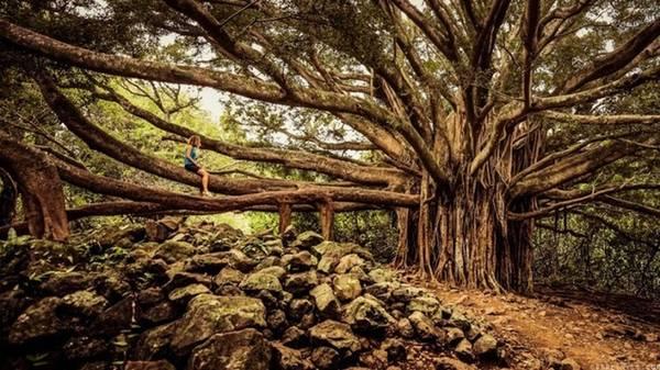 Pipiwai, Hawaii, Mỹ: Là tuyến đường chứa đầy thú vị, băng qua vườn quốc gia, bạn sẽ có dịp tận hưởng những khu rừng nhiệt đới rậm rạp với nhiều hang động, thác nước,… và các hoạt động ngoài trời thú vị khác. Đây là một trong những con đường leo núi có nhiều phong cảnh kỳ vĩ nhất tại Hawaii với thác Mkahiku, rừng tre và thung lũng trong lòng núi.