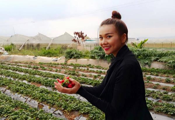 Siêu mẫu Thanh Hằng hào hứng đi hái dâu khi đến Đà Lạt.