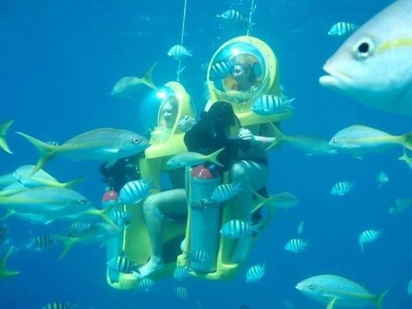 Với việc trải nghiệm trò chơi Motor driving bạn sẽ được thỏa thích ngắm san hô và những các loài sinh vật biển theo một góc nhìn hoàn hoàn khác.
