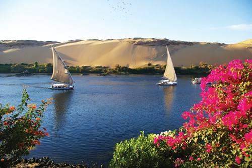 Hoa giấy bên sông Nile