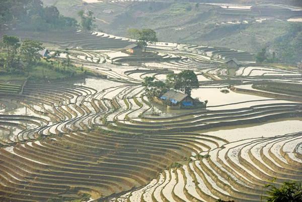 Năm nay trên địa bàn thuộc tỉnh Lào Cai có mưa nhiều vì thế các triền ruộng đã có nước sớm hơn mọi năm