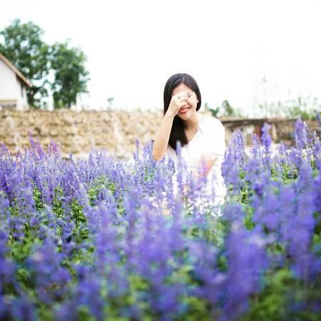 Cánh đồng hoaSalvia màu tím tuyệt đẹp bên trong khu du lịch. Ảnh:@shilverase