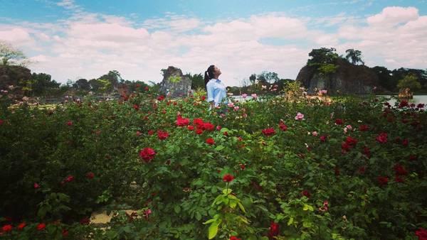 Thỏa thích chụp hình bên vườn hoa hồng rực rỡ.Ảnh: @thaont3s2