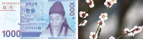 Hình ảnh học giả Yi Hwang và hoa maehwa trên tờ tiền 1,000 won. Ảnh: english.visitkorea