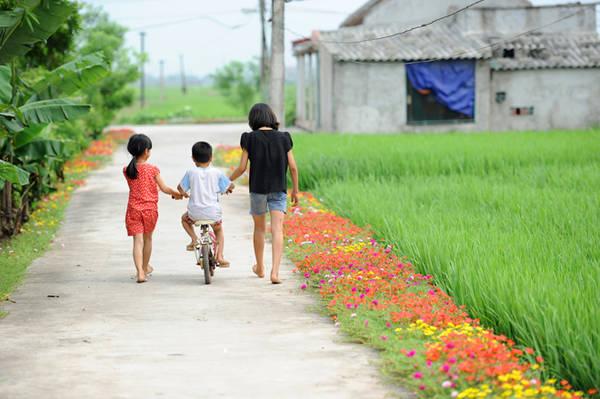 Bên cạnh màu xanh của lúa, cây tre, chuối quen thuộc, đã có thêm những màu hoa rực rỡ đem lại sự vui tươi cho các làng ở Nam Định.