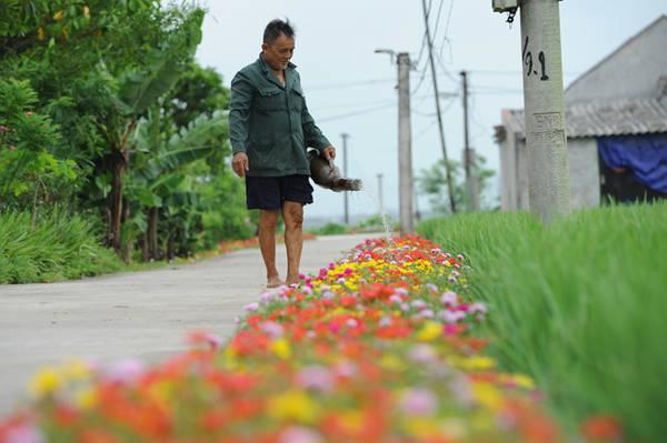 Dù hoa dễ sống nhưng vào những ngày quá oi bức, người dân thường dành thời gian đi tưới thêm nước cho cây.