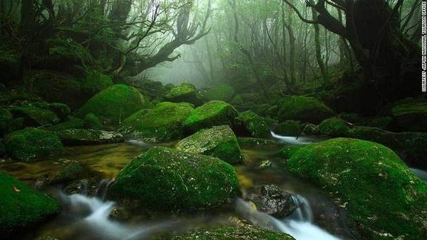 """Yakushima, Nhật Bản: Trên đảo Yakushima, hẻm núi Shiratani Unsuikyo với hệ sinh thái trù phú, nguyên sơ đã tạo cảm hứng cho bộ phim """"Công chúa sói"""" của hãng Ghibil. Tới đây, du khách có thể khám phá những khu rừng, tắm suối nước nóng, gắm cá heo, hay thư giãn trong các spa cao cấp."""