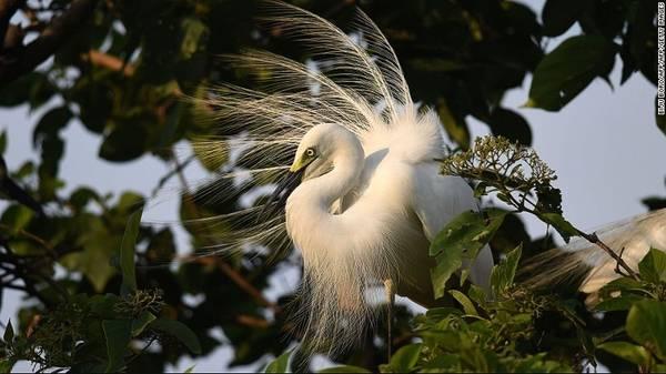 Majuli, Ấn Độ: Là hòn đảo lớn nhất Ấn Độ, Majuli có diện tích khoảng 450 km2, với hệ động thực vật hoang dã phong phú. Sông Brahmaputra đang xói mòn hòn đảo với tốc độ chóng mặt. Nhiều chuyên gia dự đoán Majuli sẽ biến mất hoàn toàn trong 2 thập kỷ tới.