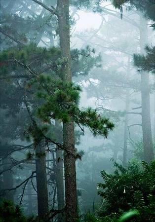 Mưa và mây ở đèo Prenn - Ảnh: Phan Kiều Loan