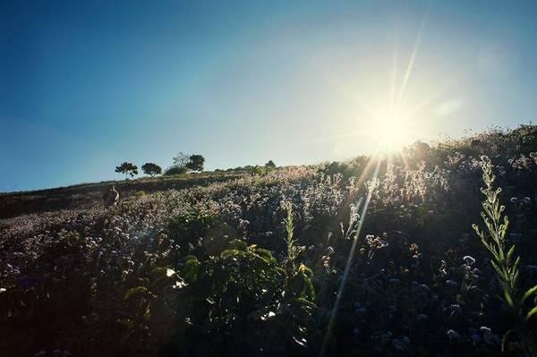 Nắng vừa kịp xuyên qua màn mây trên cao nguyên - Ảnh: Cao Cát