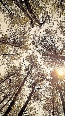 Nắng trên xứ ngàn thông - Ảnh: Cao Cát