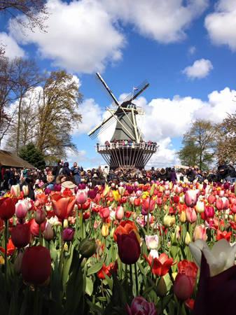 Vườn hoa Keukenhof (Hà Lan).