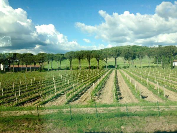 Thủ phủ của riệu nho ở Chianti, Tuscany, Italy.