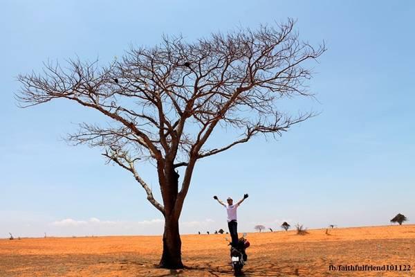 """Một cây giữa """"sa mạc"""" luôn khiến dân phượt chết mê chết mệt với đủ thứ kiểu dáng, tạo hình khi chụp ảnh với chúng."""