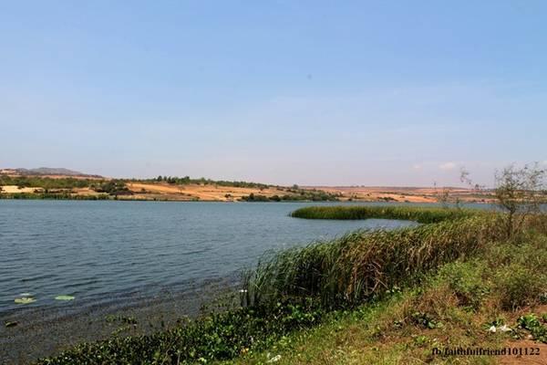 Làn nước ngọt mát và sắc xanh dịu mắt của hồ dường như giúp xua bớt cái nóng bỏng rát của vùng sa mạc này. Không chỉ có vậy, gió qua những rặng phi lao hài hòa cùng tiếng nước lay động tạo nên thanh âm diệu kỳ.