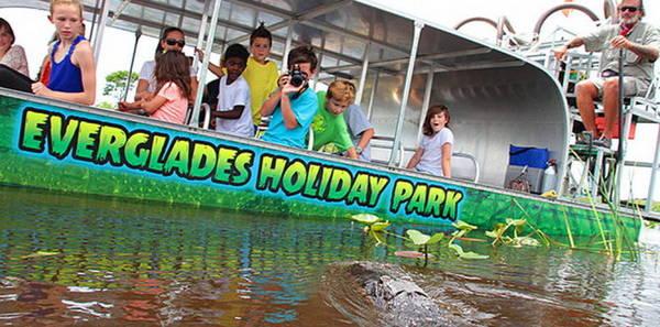Du khách nhí tiếp cận cá sấu hoang dã ở Everglades Holiday park - Ảnh: evergladesholidaypark
