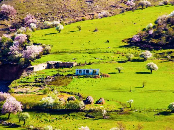 Rải rác lác đác vài căn nhà trên đồng cỏ thanh bình.
