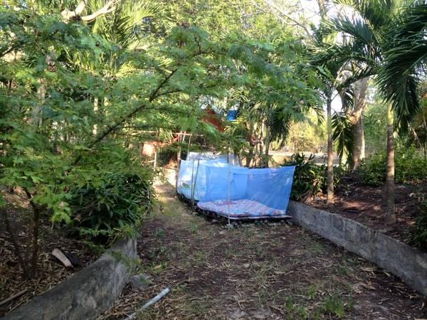 Hoặc bạn có thể trải nghiệm ngủ giữa rừng cây như thế này