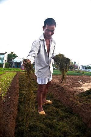 """Người dân làng Trà Quế luôn tự hào về những sản phẩm mà họ tạo ra. Ông Thanh, một lão nông trong làng, chia sẻ họ không sử dụng hoá chất trong quá trình trồng trọt. Ngoài việc sử dụng loại phân đặc biệt, phương pháp canh tác độc đáo đã giúp rau Trà Quế trở nên nổi tiếng. Nhiều người lấy hạt giống để trồng ở các làng khác nhưng chất lượng không tốt bằng"""".  Bà Đỗ Thị Thanh, một người dân tròng làng, cho hay: """"Rau Trà Quế thơm và lá nhỏ, bởi từ lúc gieo hạt đến khi thu hoạch chỉ mất 20 ngày. Đôi khi chúng tôi cũng hướng dẫn du khách trồng rau""""."""