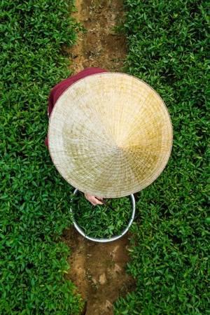 """Chia sẻ với Zing.vn, Réhahn cho hay những thông tin về nhiều địa điểm đẹp của Việt Nam bằng tiếng Anh khá nghèo nàn. """"Vì vậy, tôi muốn thu thập tài liệu và tạo ra một Wikipedia về Việt Nam trên website của riêng tôi, để mọi người biết đến Việt Nam nhiều hơn"""". Theo kế hoạch, người đàn ông này sẽ đến TP HCM để tổ chức một buổi triển lãm và ký sách vào tháng 6. Lợi nhuận sẽ chuyển cho tổ chức Christina Noble Foundation để giúp đỡ các trẻ em nghèo. Bên cạnh đó, anh cũng sẽ đưa những bức ảnh chụp về cảnh vật và con người Việt Nam Nam tham dự một triển lãm lớn tại Pháp vào tháng 9. Sự kiện này thu hút khoảng 200.000 người tham dự mỗi năm."""