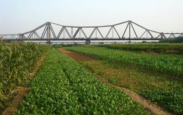 Bãi giữa sông Hồng dưới chân cầu Long Biên. Ảnh: Phúc Hưng.