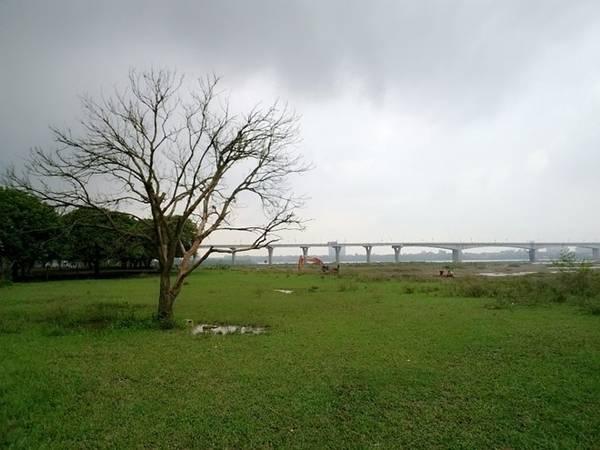 Vườn nhãn dưới chân cầu Vĩnh Tuy. Ảnh: Hiếu Công.