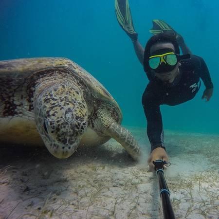 14. Lặn cùng rùa khổng lồ ở Pulau Perhentian, Terengganu: Hàng nghìn con rùa khổng lồ dạt vào bờ ở Rantau Abang để đẻ trứng, nhưng chúng không còn quay lại bãi biển nữa do tình trạng khách du lịch tràn lan. Du khách có thể lặn biển ở Terengganu từ giữa tháng 3 tới cuối tháng 10.