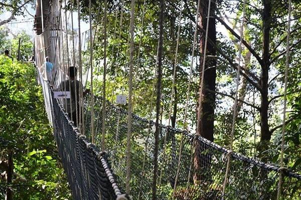 8. Hiking ở Taman Negara, Pahang: Đối với nhiều du khách đến đây lần đầu, điểm nhấn của hành trình đến Taman Negara là thử cảm giác thót tim trên cầu dây treo dài nhất thế giới. Cầu dài 530 m, cao 40 m so với mặt đất. Nếu đủ dũng cảm, bạn hãy đi bộ trong rừng vào ban đêm để khám phá các loài động vật sống về đêm.