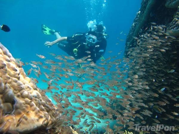 Lặn ngắm những rạn san hô nguyên sơ. Ảnh: TravelPon