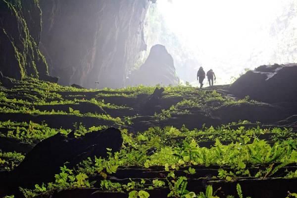 Thảm thực vật xanh tốt tuyệt đẹp trong lòng hang.