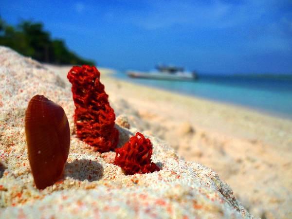 Sở dĩ, bãi biển Zamboanga có bãi cát màu hồng là do sự hòa trộn giữa cát trắng tinh và xác của san hô đỏ dưới biển đã tạo nên màu sắc đặc biệt. Ảnh: philippinetravelforum.com