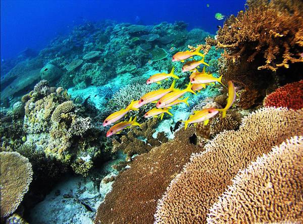 Đảo Apo là một trong những địa điểm lặn biển được yêu thích nhất nhờ những rặng san hô đa dạng và nhiều màu sắc. Ảnh: topten.ph