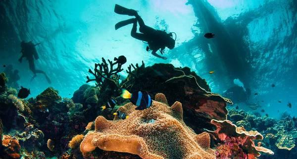 Những rặng san hô màu sắc rực rỡ ngoài khơi của Philippines luôn kích thích sự tò mò của du khách tới khám phá. Ảnh: remotelands.com