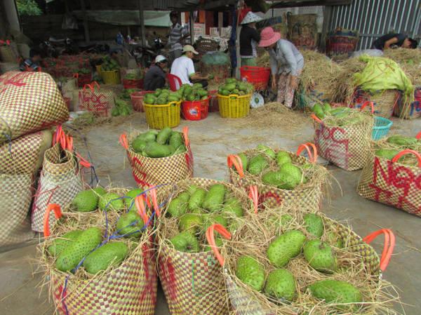 Một trong nhiều vựa thu mua mãng cầu ở Tân Phú Đông - Ảnh: N.T.Đăng