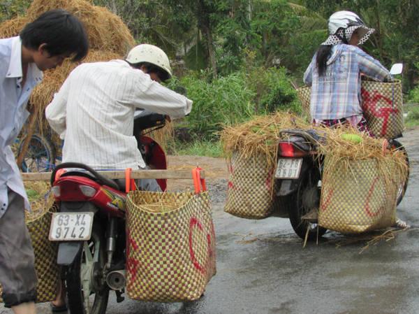 Vận chuyển mãng cầu đi bán cho các vựa thu mua ở Tân Phú Đông - Ảnh: N.T.Đăng