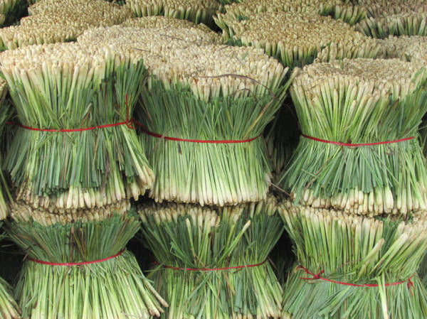 Sả cây vừa thu hoạch tại một vựa thu mua ở Tân Phú Đông - Ảnh: N.T.Đăng