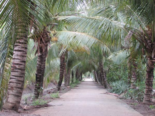 Đường quê rợp bóng dừa ở Tân Phú Đông - Ảnh: N.T.Đăng