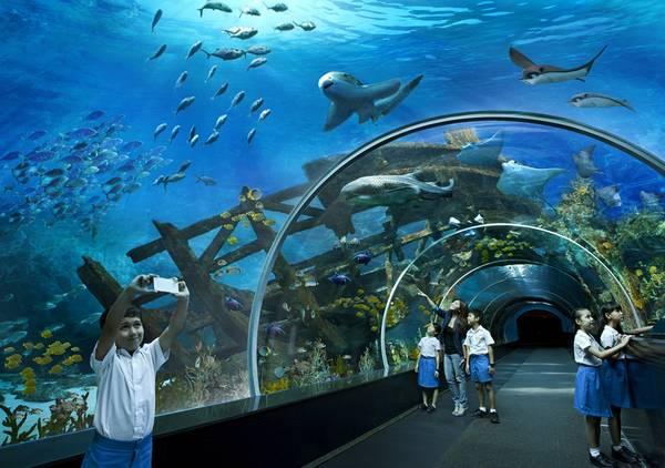 """""""Bể cá khổng lồ"""" S.E.A Aquarium với tấm kính lớn nhất thế giới, rộng 36 mét và cao 8,3 mét. Ảnh: guidetrip"""