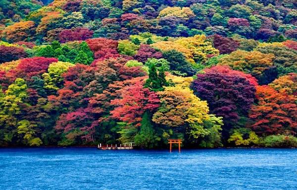 Cánh cổng Torii nổi tiếng nhất ở Nhật Bản là Itsukushima - đền thờ linh thiêng nằm trên đảo Miyajima thuộc thành phố Hatsukaichi. Khu liên hợp này được đưa vào danh sách di sản thế giới của UNESCO. Không chỉ được coi là báu vật quốc gia, hình ảnh cánh cổng Torii trước dãy núi Misen còn là một trong ba điểm du lịch hấp dẫn nhất của Nhật Bản bên cạnh Amanohashidate và vịnh Matsushima.