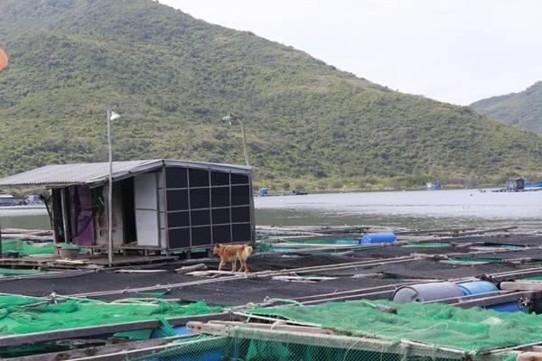 Ghé trại nuôi tôm hùm, bạn được chứng kiến cảnh người dân nuôi và chăm sóc từng con tôm từ nhỏ xíu đến to cả vài kg. Biết thêm về cuộc sống của ngư dân nơi đây cũng là một điểm thú vị của chuyến đi - không chỉ vui chơi mà còn được hiểu biết thêm những điều mới mẻ.
