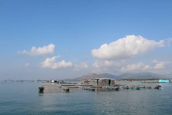 Trên đường đi, tàu sẽ ghé vào những chòi nuôi tôm hùm của người dân. Tại đây bạn có thể mua tôm hùm hoặc hải sản tươi sống với giá rẻ để ăn thoải thích ngoài đảo.