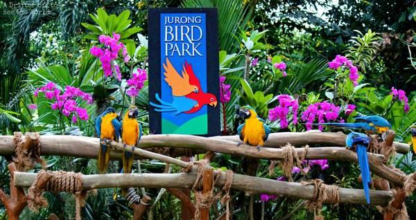 Cổng vào Vườn chim Jurong. Ảnh: singaporewest.sg