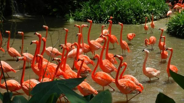 Trong công viên có rất nhiều loài chim quý hiếm. Ảnh: wallpapers