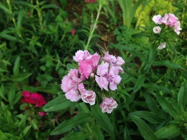 Hoa cỏ trong vườn nhà. Ảnh: VietTrekking Homestay